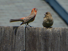 Love is in the air... (timber1212) Tags: love starbucks bar drink finch crow squirrel