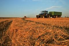 DSC_8589 (anetaležáková) Tags: summer sunset summerharvest sunnydays harvest agriculture agriphoto czechagri caseihpuma case casepuma165 caseoptum casepuma200 claas claaslexion newholland
