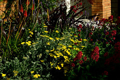Flowers 4 (TheseusPhoto) Tags: sanfrancisco california goldengatepark beautyinnature colorsoftheworld colors nature naturephotography natureporn flowers vivid