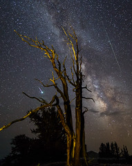 Blue and Green Perseid Meteors (Jeffrey Sullivan) Tags: persied meteor bristlecone pine inyo national forest county bishop california usa easternsierra astronomy astrophotography landscape nature travel night photography workshop milky way canon eos 6d photo copyright august 2018 jeff sullivan shower ancient tree