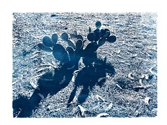 Cactus (beaudaignault) Tags: alternativeprocess desert fineart