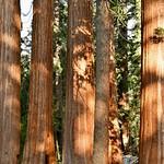 Kings Canyon National Park thumbnail