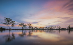 Reflections (@CuongDo) Tags: reflect reflections tree trees water countryside clouds sky sony sonya7mark2 ilcea7m2 longexposure exposure nước hoàng hôn