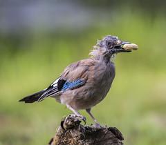 IMG_8973 (Mal.Durbin Photography) Tags: forestfarm maldurbin wildlifephotography wildlife naturephotography naturereserve nature animals birds