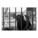 Guard Dogs thumbnail