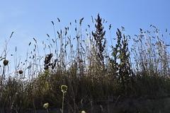 An der Ostsee in Schönhagen - Steilküstenkante (14) (Chironius) Tags: schleswigholstein schwansen deutschland germany allemagne alemania germania германия niemcy gegenlicht