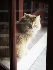 Mandy Tuesday(?): Through A Door (Photo Amy) Tags: 40150mm456 adorable animal animals cat cute cuteness feline fluffy fur ginger kitten kittens longhair longhairedcat november olympus orange
