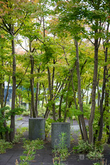 Exterior view of Keio University, Mita Campus, South Building (慶應義塾大学三田キャンパス 南館) (christinayan01 (busy)) Tags: tokyo japan architecture building perspective garden university tree