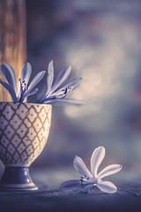 Blue dream (Ro Cafe) Tags: agapanthus blueflowers extensiontubes helios58mmf2 sonya7iii stilllife blooms blue flowers vintagelens softfocus bokeh