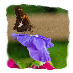 Silver Spotted Skipper on Violet Pansy (tomh2m) Tags: painterly butterfly pansy violetpansy skipper skipperbutterfly silverspottedskipper artiststyle artist