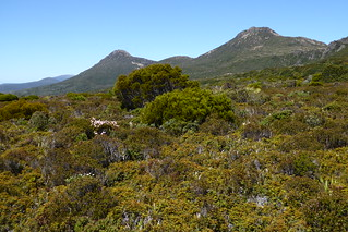 Wanderung zum Hartz Peak (rechts im Bild)
