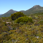 Wanderung zum Hartz Peak (rechts im Bild) thumbnail