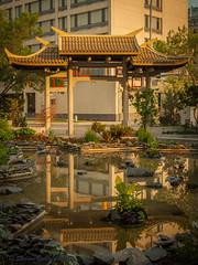 Chinatown (Sheldon Emberly) Tags: chinatown winnipeg urbanscape 50mm goldenhour water reflections cityscape