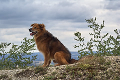 (Oliver Zimmermann) Tags: sonyalpha cloudsky animal animalhead animalthemes animalsinthewild canine day dog domestic domesticanimals land mammal nature nopeople oneanimal outdoors pets plant rock sky solid tree vertebrate rockobject