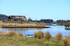 IMG_9141 (christineNZ2017) Tags: ambury regional park amburypark birdsanctuary birdlife bird sanctuary southauckland auckland newzealand winter