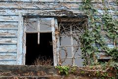 Damaged windows, blue peeling paint (Monceau) Tags: jersey damaged windows neglected blue peeling paint vines broken