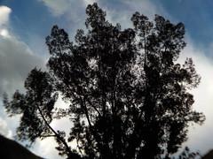 El árbol atrás de la casa (Juan Antonio Xic Eseyosoyese) Tags: el árbol de mi cabeza noche azul verde casa pino cielo follaje ojas nikon soledad formas bicolor méxico minimalismo contraluz gran angular ramas hojas frondoso coolpix cerro grande nubes vecino gigante copa arriba