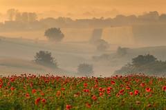 Morning landscape (fotoswietokrzyskie) Tags: grass sky mist tree landscape nikon d800 nikond800 serene morning dawn nikkor 80400mm f4556 ed vr poppy flowers fog