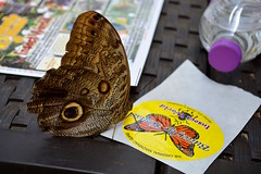Can I have a sticker too? (Jake (Studio 9265)) Tags: michigan usa united states america mi june 2018 up north island mackinac butterfly house insect world sticker original neat yellow circle