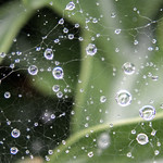 Raindrops on a Spider Web, Cockermouth, Cumbria, UK thumbnail