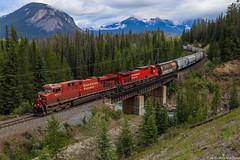 CP 8817 ~ Ottertail (Chris City) Tags: train railway railroad mainline grain westbound mountains rockies cpr es44ac field ottertail