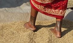 1 UpsREGty2U6kPkAEtfXqRg (Matriux2011) Tags: barefoot dirtysoles cracksoles indian nepali barefootextreme talonescurtidos piesrajados