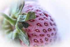 Ice strawberry .. (Julie Greg) Tags: strawberries nature ice colours fujifilmxt20 fujifilm details macro