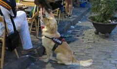Seville Colours - Leon (Pushapoze (NMP)) Tags: spain sevilla dog perro leon street
