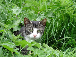 Feral Cat - You again?