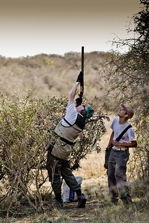 Argentina Luxury Dove Hunting 39