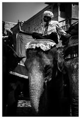 Indian Shot (vdaskalov) Tags: india elephant ride rider orient black white asia animal indian