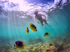 Na Pali Coast (Nathan Wickstrum) Tags: hawaii honeymoon kauai oahu na pali coast honu