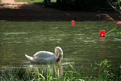 ... (elenas_1) Tags: biélorussie belarus signe oiseau nature lac soleil reflets lumière lueur eau été