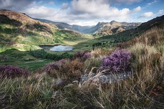 Langdale (John Ormerod) Tags: landscape bleatarn lakedistrict photography lake mountain mountains langdale langdalepikes thelangdales cumbria england morning heather light nikon photograph nature countryside rural vista view summer