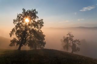 Foggy sunrise #своифото, #пейзаж, #природа, #утро, #рассвет, #дерево, #натура, #восход, #sunrise, #nature, #tree, #Landscape, #sun, #туман, #лучи, #foggy,