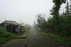 Fog (Fedroff) Tags: travel sony alpha 6000 nature monkey fog landscape