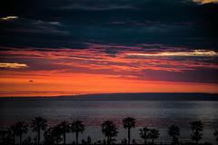 478 (Melissa Maples) Tags: batumi batum ბათუმი adjara აჭარა georgia gürcistan sakartvelo საქართველო asia 土耳其 nikon d3300 ニコン 尼康 nikkor afs 18200mm f3556g 18200mmf3556g vr spring evening dusk sundown sunset clouds blacksea sea water silhouette beach trees palms palmtrees