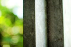 spider net (Katrinitsa) Tags: july europe germany nature landscape colors bokeh focus zoom spider net door city breathtaking awesome dream dreamer dreamy art artistic travelphotography travel insect inspiration inspiring summer ef35mm f14l usm ef35mmf14lusm canon canoneos600d koblenz macro