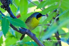 IMG_5948 (nitinpatel2) Tags: bird nature nitinpatel
