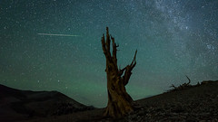 Perseid Meteor 1:01 am Monday Morning (Jeffrey Sullivan) Tags: perseid meteor shower ancient bristlecone pine inyo national forest county bishop easternsierra sierra astronomy astrophotography landscape nature travel night photography workshop milky way nikon d750 photo copyright august 2018 jeff sullivan