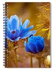 anemone-blue-flower-carlene-smith (Fine Arts Designer) Tags: notebook notebooks writing write stationaery paper spiral