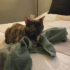 Fern takes over Josh's towel (kristykay22) Tags: fern