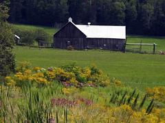 A barn in Avoca (Grenville-sur-la-Rouge), Quebec (Ullysses) Tags: grenvillesurlarouge farm ferme barn grange wildflowers summer été quebec canada avoca argenteuilregionalcounty laurentides laurentiens