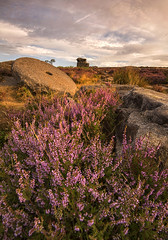 Surprise View Sunrise (Tracey Whitefoot) Tags: 2018 august tracey whitefoot surprise view landscape sunrise dawn heather hathersage peaks derbyshire peak district summer warm tones england english grindleford hope valley mother cap rock