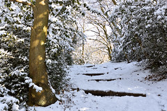 Lesnes Abbey woods, Kent  -  (Selected by GETTY IMAGES) (DESPITE STRAIGHT LINES) Tags: february season winter wintery snowscene snow snowfall nikon d7200 nikond7200 morning am nature mothernature naturalbeauty beauty tree trees wood woodlands forest leaves fallenleaves branch branches bark wet bexleyheath kent bexleyheathkent parkland parklife grass landscape nikon1024mm getty gettyimages gettyimagesesp despitestraightlinesatgettyimages paulwilliams paulwilliamsatgettyimages lesnesabbeywoods abbeywood abbeywoods nikon1024mmf3545geddx beastfromtheeast thebeastfromtheeast