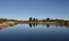 Tranquil..... (flying-leap) Tags: newzealand northcanterbury nz wildlife southisland kaiapoi reflections kaiapoilakes wetlands lake sony sonydscrx10m4 sonydscrx10iv sonyrx10iv wildlifenz tranquil scavenger7
