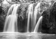Paronella Waterfall 4 (judyclayton) Tags: paronellapark tropicalnorthqueensland missionbeach cassowarycoast waterfall blackandwhite