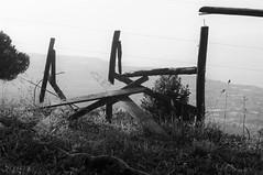 (Maria Rachieli) Tags: erba cielo albero strada mare sky landscape wood legno sea road grass nature outdoor park
