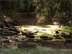 Angkor, Preah Khan Pond 20180203_134256 DSCN2741 (CanadaGood) Tags: asia seasia asean cambodia siemreap angkor khmer preahkhan temple tree pond archaeology canadagood 2018 thisdecade color colour