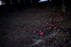 DSC_5019 (satooooone) Tags: nikon d750 snap landscape 風景